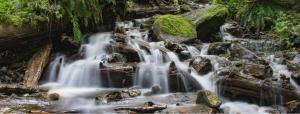 Three Living Streams