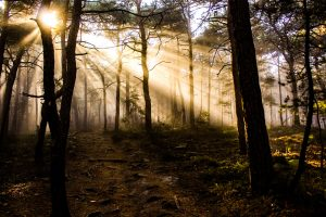 photo-of-trees-at-golden-hour-1083342